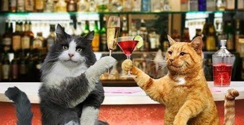 Анекдот от кота Миши про женщину 26