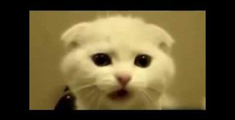 Разное интересное видео про животных