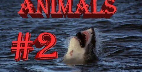 BFM|BestFunnyMovies|#2 Animals|ЛУЧШИЕ СМЕШНЫЕ ПРИКОЛЫ С ЖИВОТНЫМИ