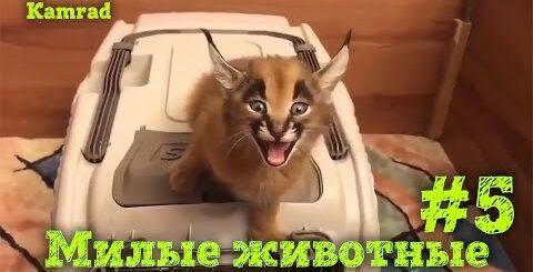 Приколы с котами и собаками, Лучшая подборка приколов с смешными животными! #5