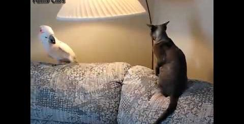 Приколы с кошками!