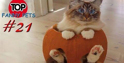 ПРИКОЛЫ 2019, ТОП СМЕШНЫХ ВИДЕО С КОТАМИ/Смешные животные/Смешные кошки/TOP FUNNY PETS #21