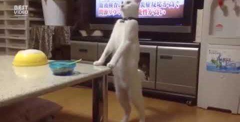 Приколы с кошки