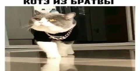 Юмор. Смешная подборка приколов кошка и собака 2019. Видео для детей. Приколы. Юмор. Лучшие приколы