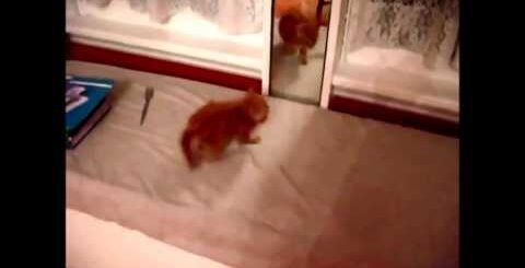 Funny kitten  забавный котёнок