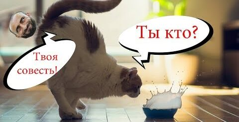 Приколы с котами и смешная ОЗВУЧКА – Попробуй не засмеяться – ПРИКОЛЫ 2018 от PSO