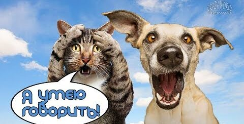 Смешные коты и кошки 2019 | Приколы с котами и кошками 2019 | Говорящие коты #91