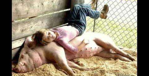 Приколы про свиней