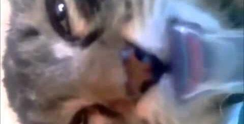 10 самых смешных видео про животных 3gp