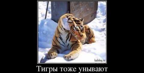 Смешные демки про Россию, Специфический русский юмор
