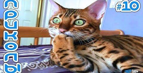 Приколы с Котами и Кошками 2019   Смешные Коты и Кошки 2019   Приколы с Животными #10