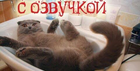 Приколы с котами и смешная озвучка животных – Магия и Коты от PSO