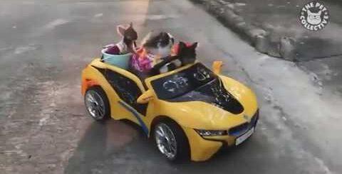 Приколы с котами,собаками и другими животными #26 Jokes with cats, dogs and other animals