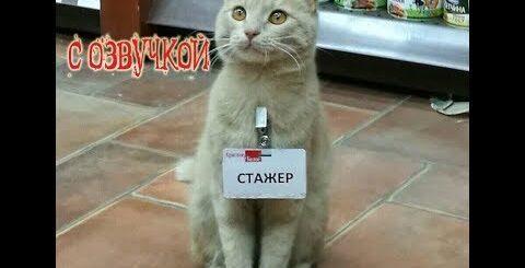 Приколы про котов с ОЗВУЧКОЙ - СМЕШНЫЕ коты и кошки 2018 – от Domi Show