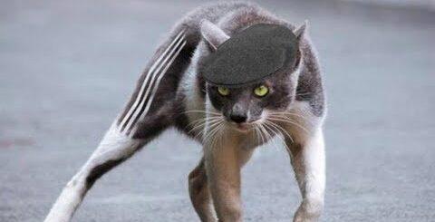 Русские приколы с кошками - Смешные кошки с русским колоритом СМЕШНЫЕ КОТЫ 2018