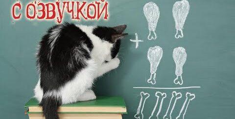 Приколы с котами и смешная озвучка животных – СНОВА в ШКОЛУ про котов 2018 от PSO