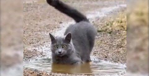 Самые смешные, Забавные и Умные Кошки! Приколы с кошками! Funny_cats_video.