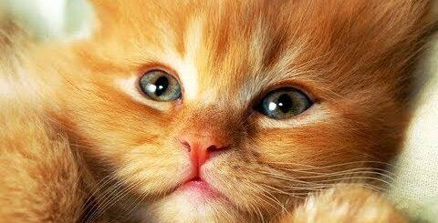 СМЕШНЫЕ ЗВЕРЯТА   Видео приколы про детенышей животных