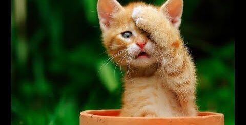 Лучшие приколы про котиков | Подборка самых смешных кошек и котят #3