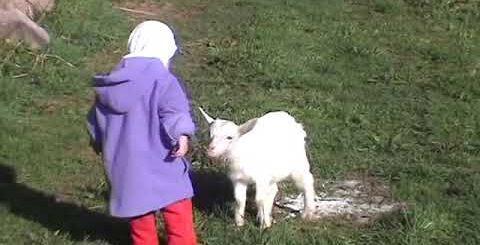 козы с детьми жесткие приколы