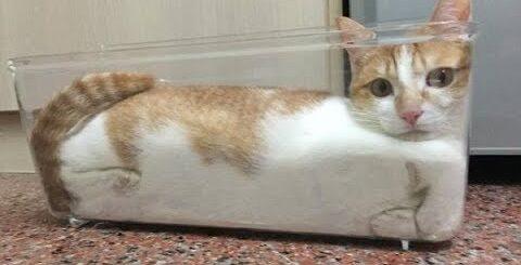 Смешные Коты достойные Оскара Смешные Кошки (Лютые приколы) - МатроскинТВ