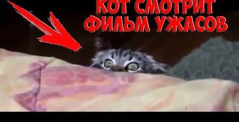 Кот смотрит фильм ужасов / Видео приколы про кошек