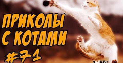 Приколы с кошками и котами Подборка Смешных котов и кошек 2017 Funny Cats Compilation