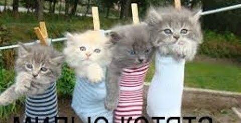 Смешные коты и кошки   видео приколы с кошками
