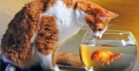 Коты разбойники 30 эп. Ленивая рыбалка. Лучшие приколы с животными