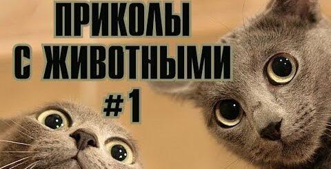 COUB MANIA - ЛУЧШИЕ ПРИКОЛЫ С ЖИВОТНЫМИ / ПРИКОЛЫ С КОТАМИ И КОШКАМИ #1