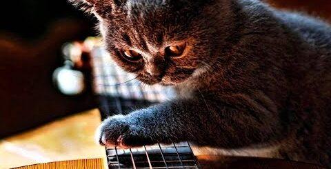 Приколы с котами (Кот играет на гитаре) - Cats funny