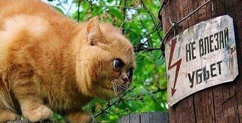 КОТЫ ПРИКОЛЫ 2017 - ТОПовая подборка СМЕШНЫЕ КОТЫ   Funny Cats 2017