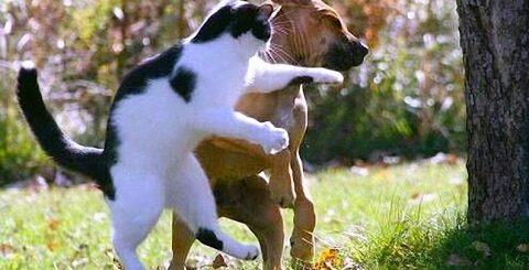 Приколы с котами (Коты против собак) - Cats funny