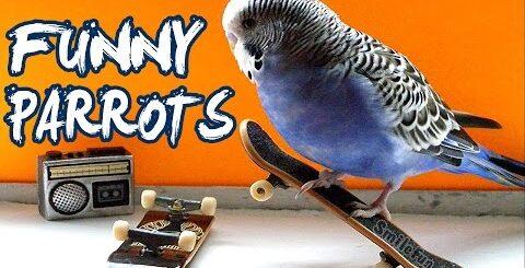 Смешные Попугаи  ДО СЛЕЗ Приколы с попугаями 2017 С Озвучкой