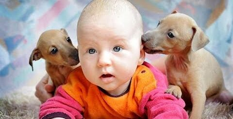 Самые смешные Приколы - Дети и Животные!