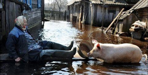 Село, Деревня  ТОП сельские, деревенские Приколы. сельская жизнь 2017