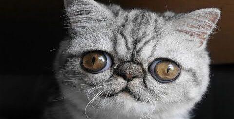 ПРИКОЛЫ 2017 Июль #201 Ржака до слез Самые смешные русские приколы с животными свежие приколы