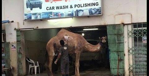Мойка и рукожопые люди. ТОП!!! Приколы Washing TOP! Fun