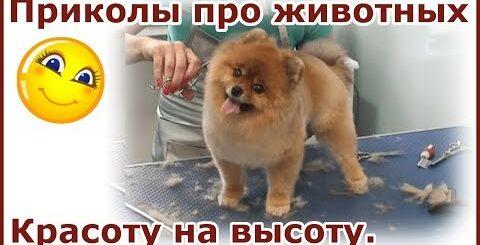 Самые смешные собаки. Пёсики кайфуют от стрижки и расчесывания. Приколы про собак.