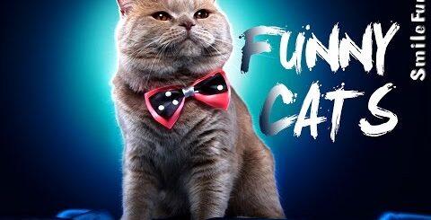 Смешные Коты 2017 Приколы с Котами Кошками ДО СЛЕЗ