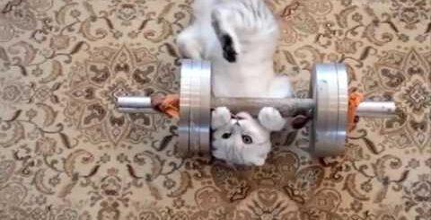 Смешные КОТЫ - Лучшие приколы Funny cats compilation Подборка #16 - LIKE A BOSS