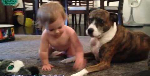 Топ 50 Лучшая подборка Собаки и Дети!Приколы с Детьми! _ Top 50 Best selection of Dogs and Children