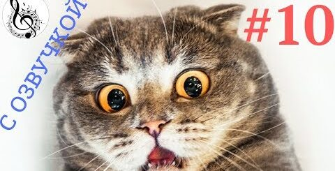 ПРИКОЛЫ С КОТАМИ СМЕШНЫЕ КОТЫ  ТОПовая ПОДБОРКА  #10 смешные животные
