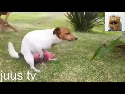 Приколы про животных любовь зла!!!РЖАЧ!!!