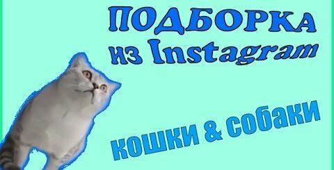 Приколы с животными из Instagram   Приколы с котами   Приколы с собаками