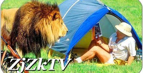 Лучшие приколы с животными, самые свежие и смешные №149. Львы пришли в гости. Fun with animals #149