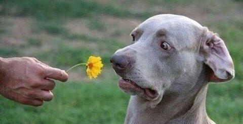 Смешные собаки/Приколы про животных 2016#3