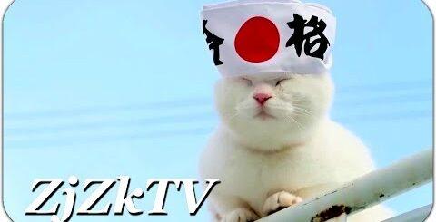 Убойные приколы с животными №155. Япона кот. Лучшие приколы с животными, самые свежие и смешные №155