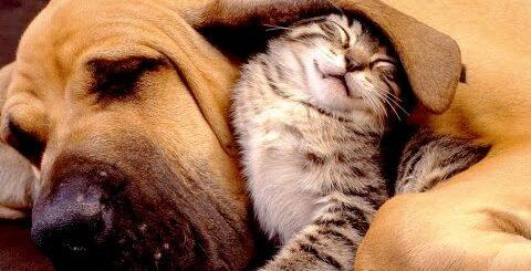 Смешные видео про животных  Приколы с кошками