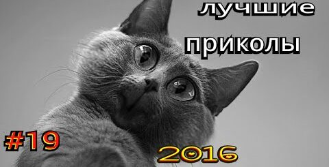 ЛУЧШИЕ ПРИКОЛЫ 2016